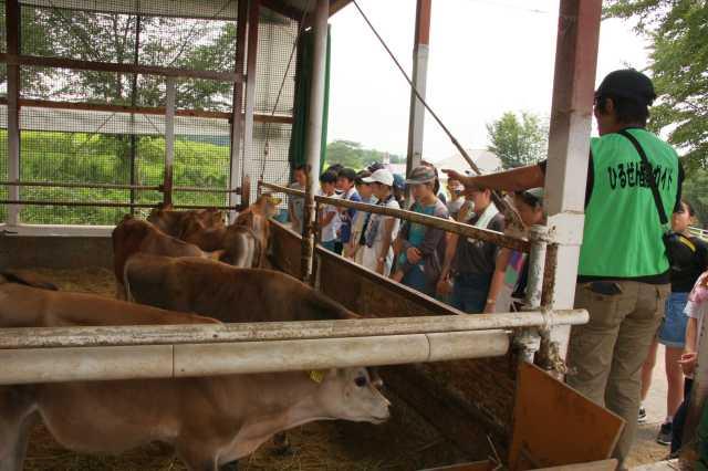飼われているのは小型のジャージー牛